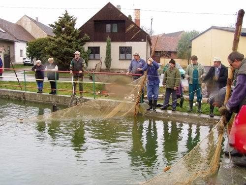 Výlov rybníka vBílově - foto 07