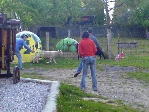 Stěhování oveček